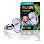 Exo Terra Halogen Basking Spot 100W, PT2183