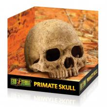 Exo Terra Primate Skull, PT2855