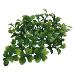 Lucky Reptile Turtle Plant: Bacopa, TP-44
